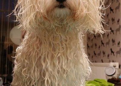 Adrienn kutyakozmetika Zugló
