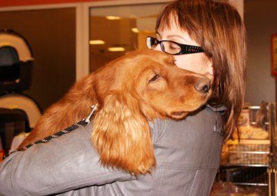 Kutyakozmetika kiállítási felkészítés