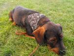adrienn_kutyakozmetika_tacsko